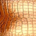 Krokodília koža
